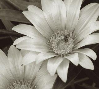 flower-alt-4